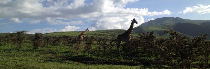 Serengeti - Day 3 (45)