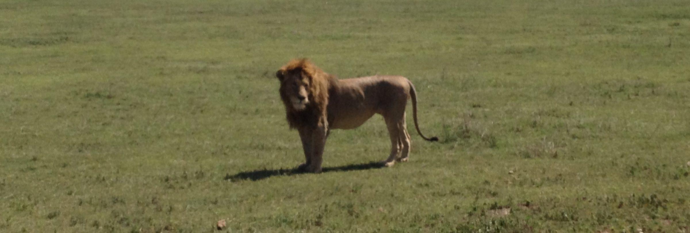 Ngorongoro Crater - Day 4 (46)